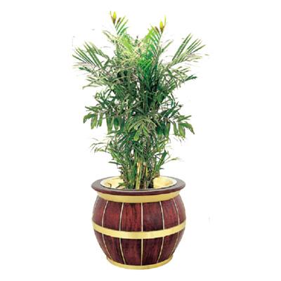 巴比伦花盆